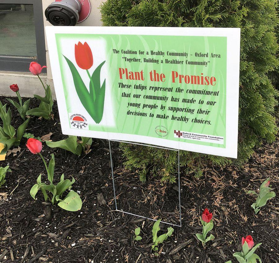 These+are+some+of+the+tulips+planted+by+the+Coalition+for+a+Healthy+Community.+%3Cem+data-w-id%3D%5C%228f4f1905-0e8f-e957-73a7-170b659ea320%5C%22%3EPhoto+by+Patrick+Donovan%3C%2Fem%3E