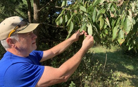 John Kinne examines the trees on his Oxford Township property searching for the emerald ash borers.<em> Photo by Ryan McSheffrey</em><br>