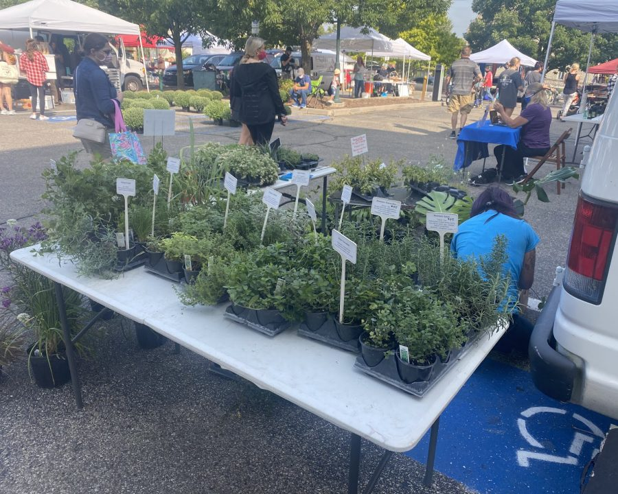 Plants and herbs on sale at last week's Farmers Market