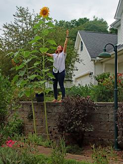 Paula Seger stands next to one of her mammoth sunflowers