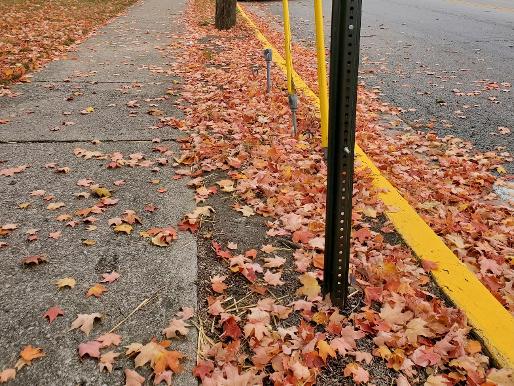 Leaves along Maple Street.