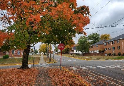 Leaves build up along E. Spring Street.