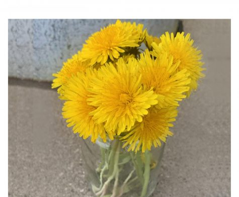 The ubiquitous yellow flowers may be the most plentiful flowering plant in Ohio, according to an Ohio State University weed guide.
