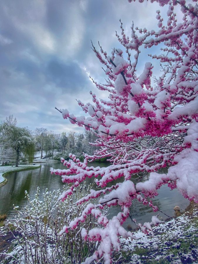 The snow-rimmed pond on Western Campus was framed by yet another icy Redbud at 7 a.m. Wednesday. Photo by Emily Chopelas