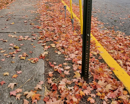 Oxford is picking up leaves that are raked to the curb through the end of November.